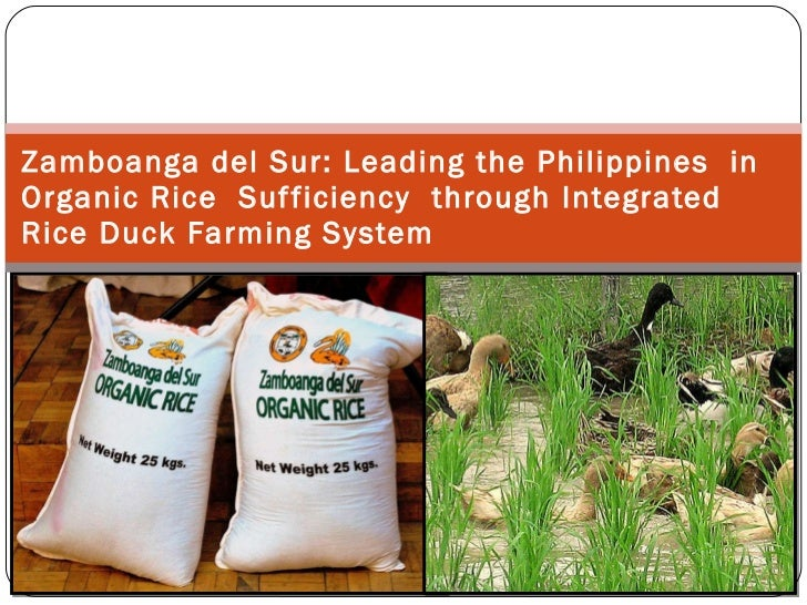 Zamboanga del Sur:   Leading the Philippines  in Organic Rice  Sufficiency  through Integrated Rice Duck Farming System