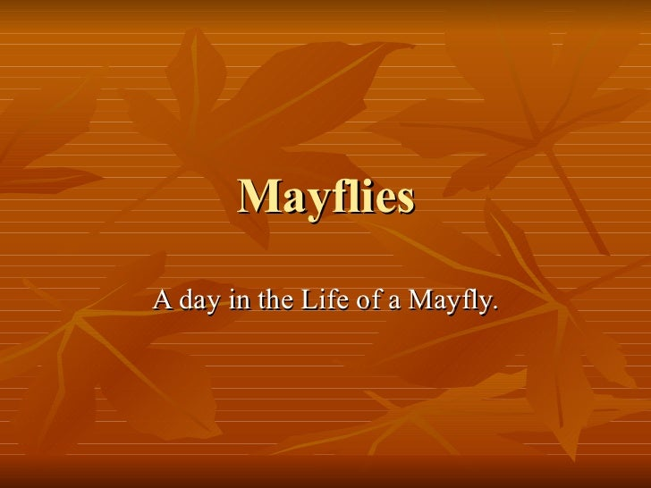 Mayflies A day in the Life of a Mayfly.