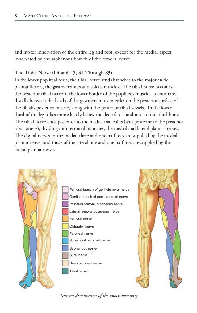 Superficial Peroneal Nerve Sensory Distribution