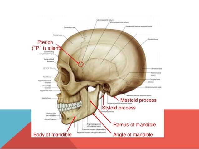mastoid ear