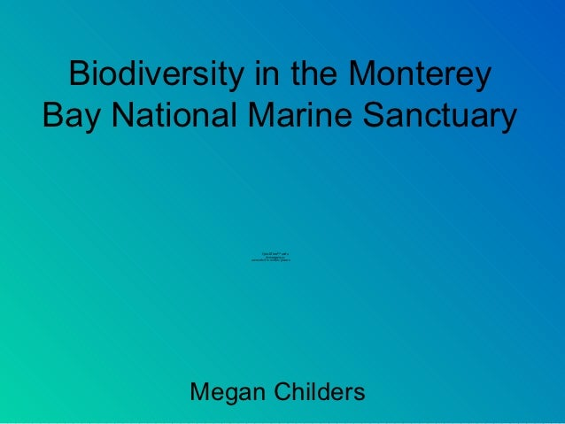 Biodiversity in the MontereyBay National Marine Sanctuary                    QuickTime™ and a                      decompr...