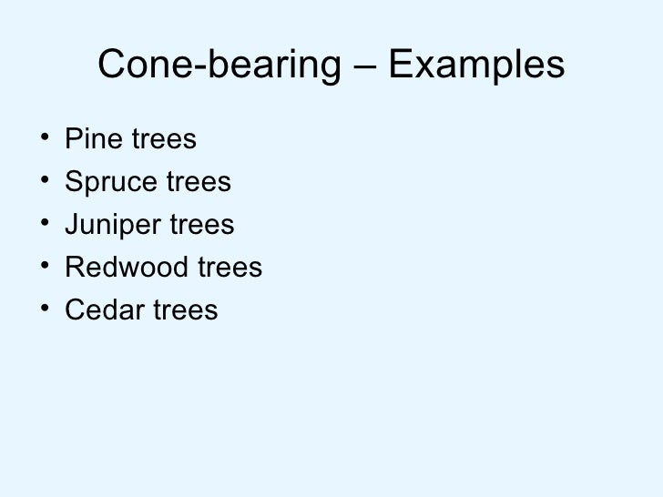 Cone Example Cone-bearing – Examples