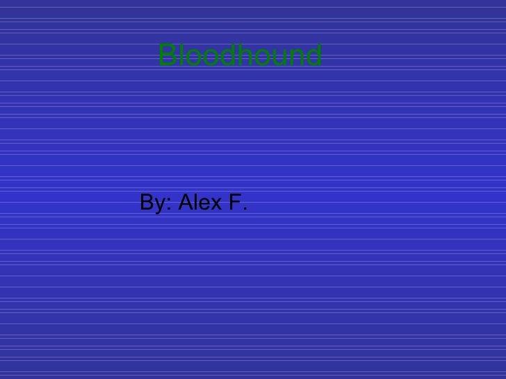 Bloodhound By: Alex F.