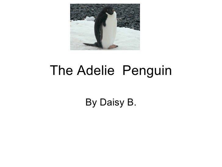 The Adelie  Penguin By Daisy B.