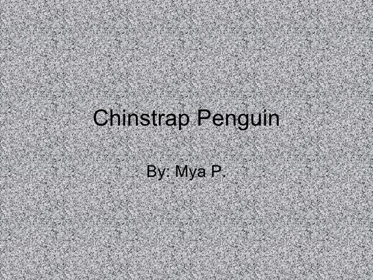 Chinstrap Penguin By: Mya P.