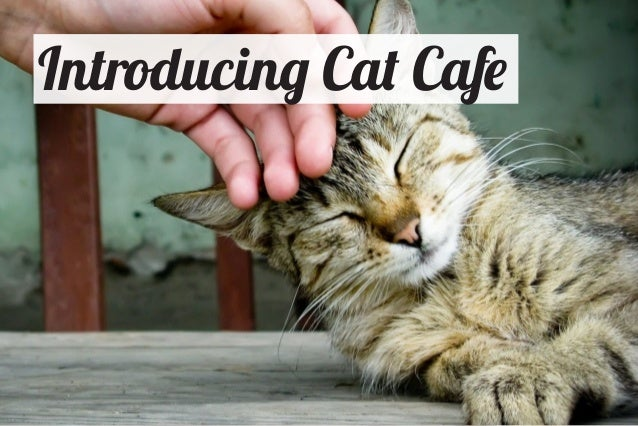 Introducing Cat Cafe