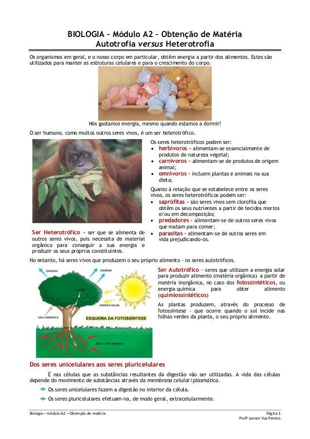 Biologia – módulo A2 – Obtenção de matéria Página 1Profª Leonor Vaz PereiraBIOLOGIA – Módulo A2 – Obtenção de MatériaAutot...