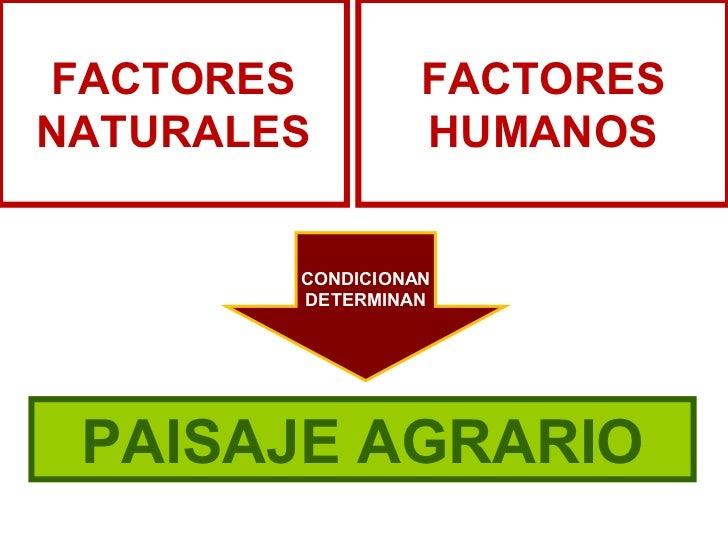 FACTORES          FACTORESNATURALES         HUMANOS        CONDICIONAN        DETERMINAN PAISAJE AGRARIO
