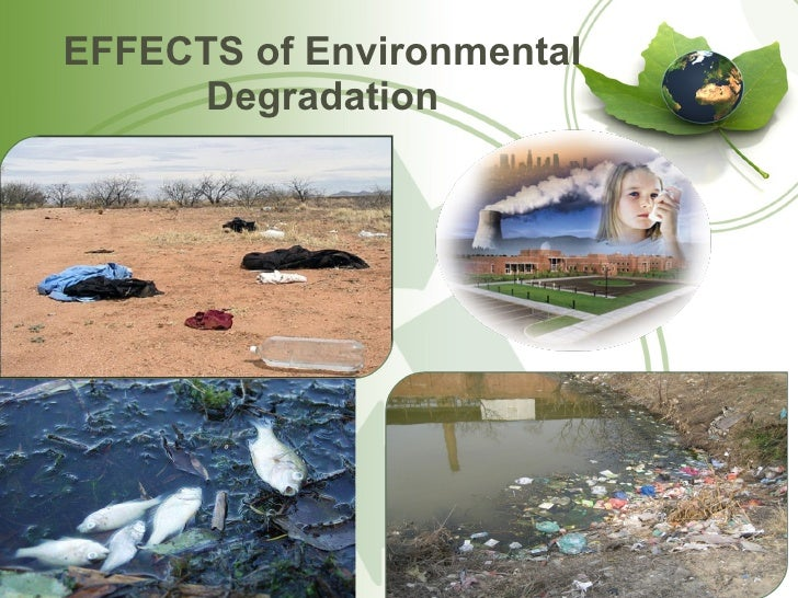 Essay On Environmental Degradation