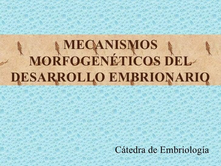 Mecanbiolog