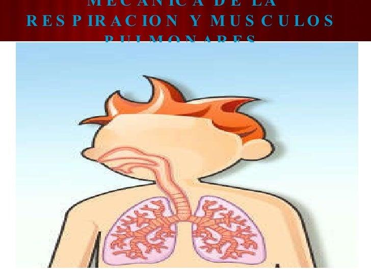 MECANICA DE LA RESPIRACION Y MUSCULOS PULMONARES