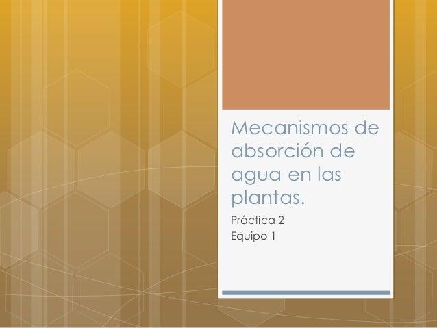 Mecanismos deabsorción deagua en lasplantas.Práctica 2Equipo 1