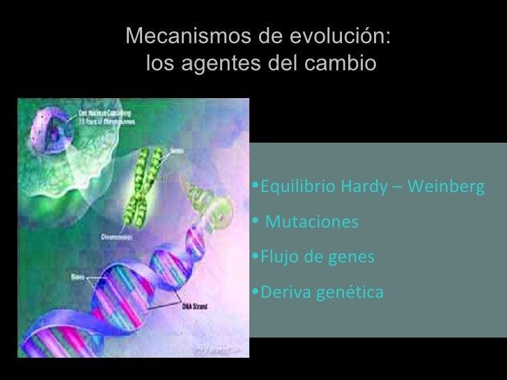 <ul><li>Equilibrio Hardy – Weinberg </li></ul><ul><li>Mutaciones </li></ul><ul><li>Flujo de genes </li></ul><ul><li>Deriva...