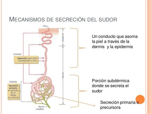 Laura Zuniga Mecanismos de secreci&...