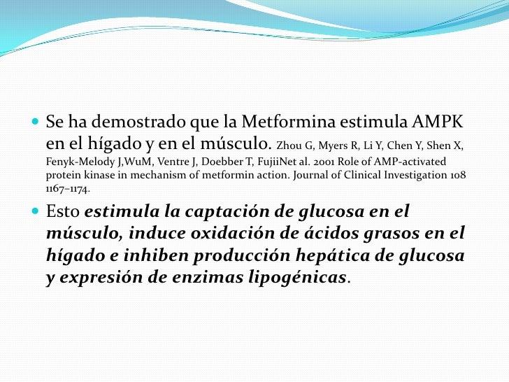 Mecanismos moleculares de la metformina