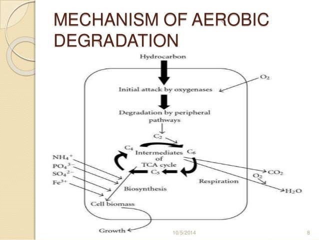 aerobic anaerobic biodegradation This review summarizes recent research results on the biodegradation of polychlorinated biphenyls (pcbs) these compounds, commonly.
