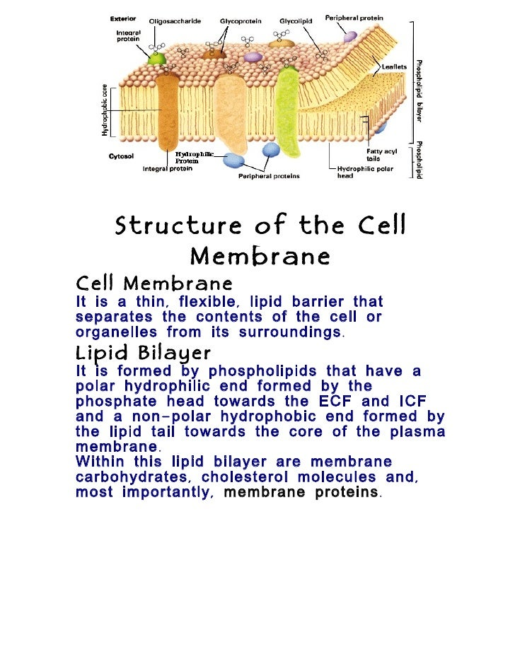cell structure and function essay Pick one structure of a eukaryotic cell and develop a hypothesis as to what you think the implications would be if that structure did not function properly the lack of energy is a result of the mitochondria inability to produce sufficient amounts of atp.