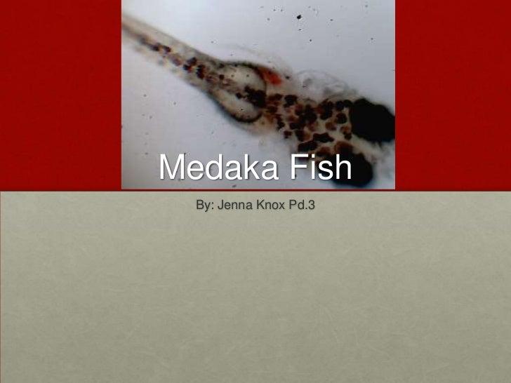 Medaka fish project 22
