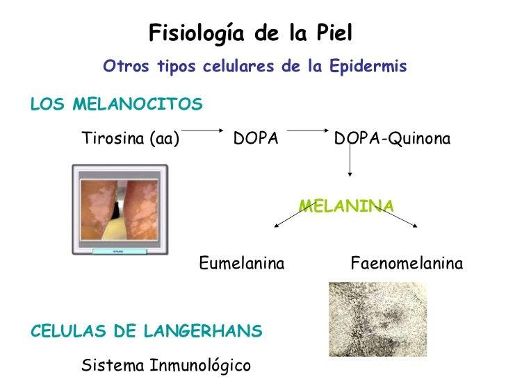 Resultado de imagen de síntesis de la melanina