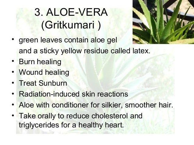 pictures How to Use Aloe Vera to Treat Burns