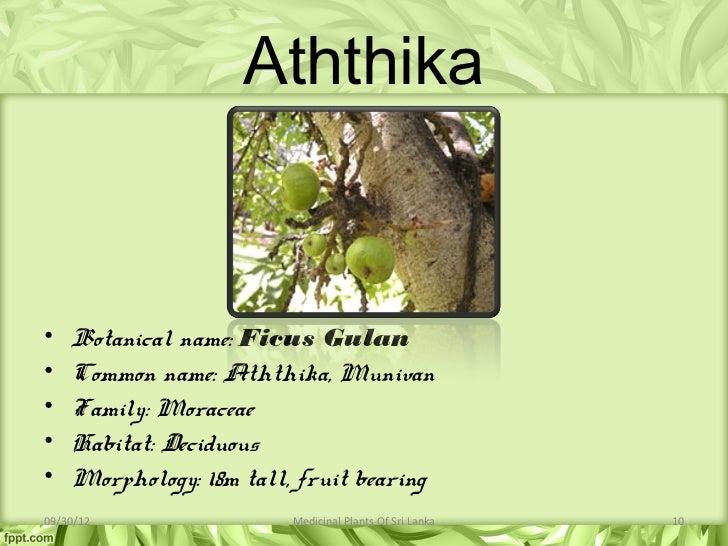Medicinal Plants Of Sri Lanka