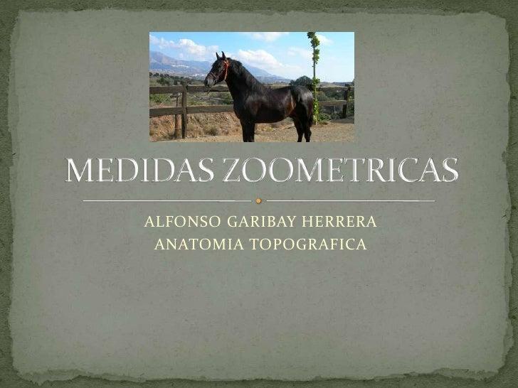 ALFONSO GARIBAY HERRERA<br />ANATOMIA TOPOGRAFICA<br />MEDIDAS ZOOMETRICAS<br />