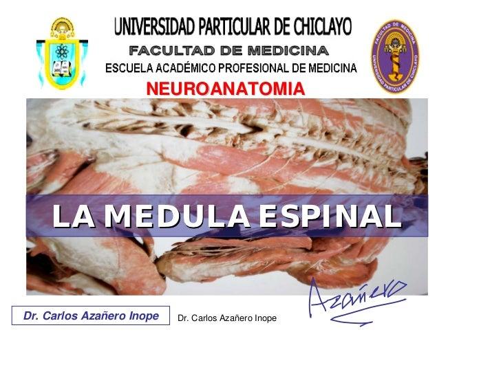 NEUROANATOMIA         LA MEDULA ESPINAL   Dr. Carlos Azañero Inope   Dr. Carlos Azañero Inope