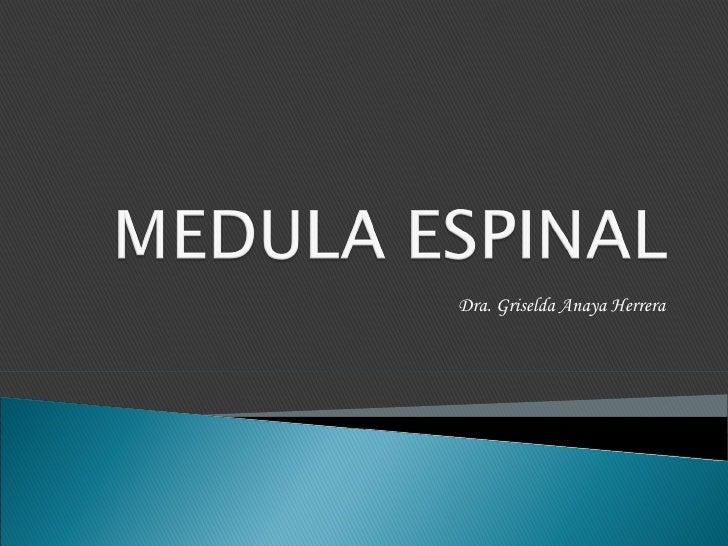 Medula Espinal Meninges