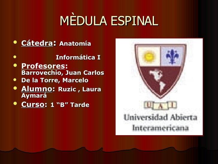 MÈDULA ESPINAL <ul><li>Cátedra :  Anatomía  </li></ul><ul><li>Informática I </li></ul><ul><li>Profesores :   Barrovechio, ...