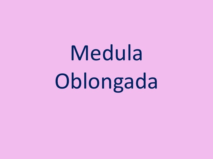 Medula oblongada