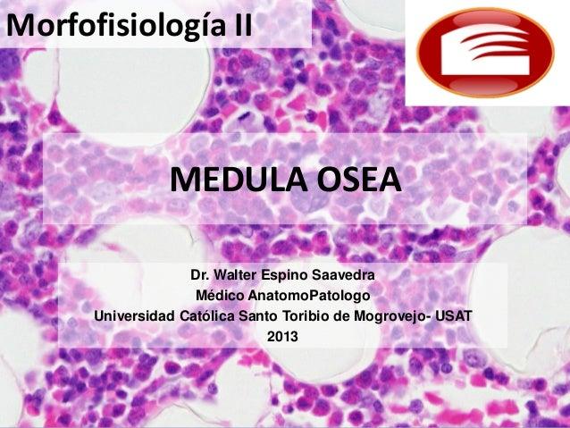 Morfofisiología II  MEDULA OSEA Dr. Walter Espino Saavedra Médico AnatomoPatologo Universidad Católica Santo Toribio de Mo...