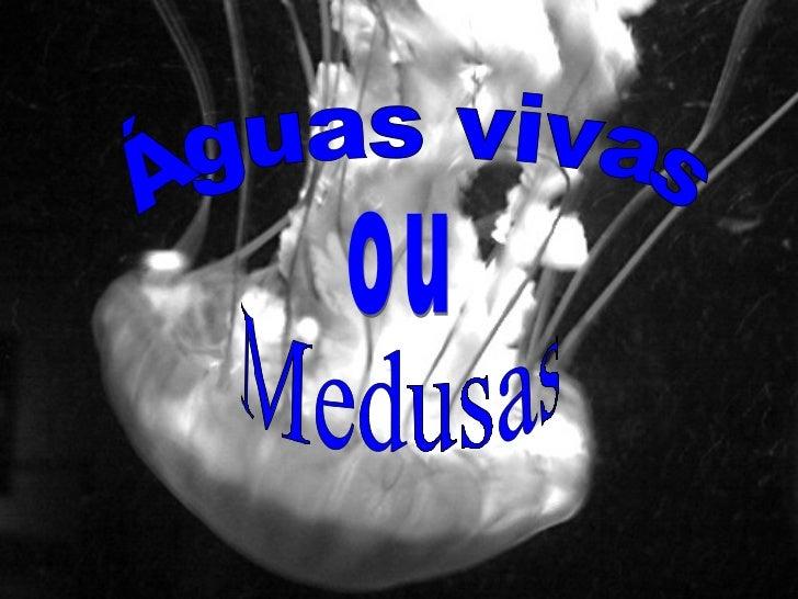 Águas vivas ou Medusas