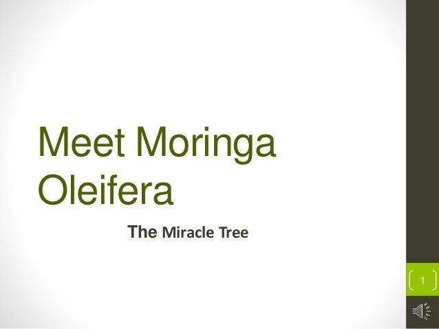 Meet moringa oleifera