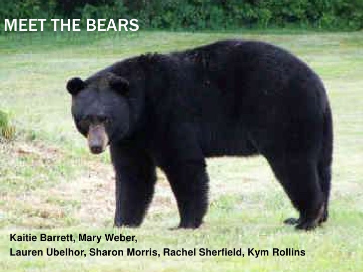 MEET THE BEARS     Kaitie Barrett, Mary Weber, Lauren Ubelhor, Sharon Morris, Rachel Sherfield, Kym Rollins