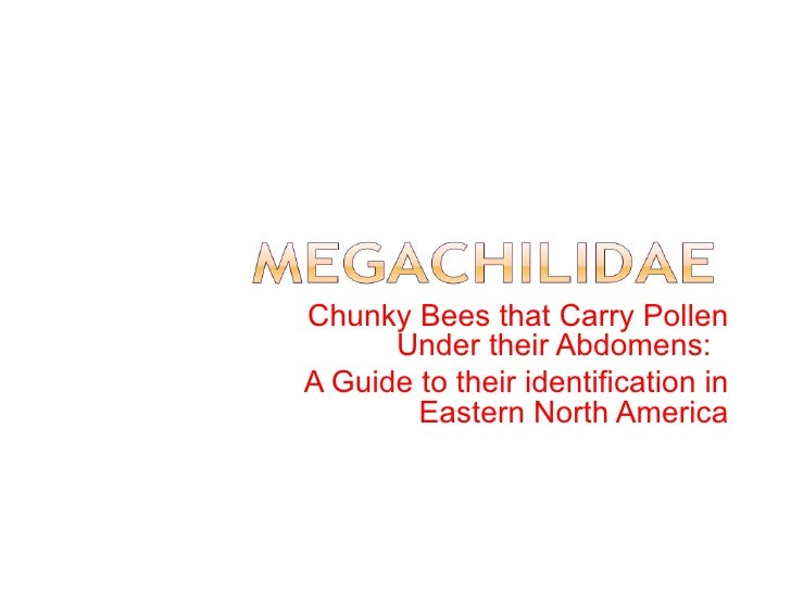 Identification Guide to the Megachilidae Genera of Eastern North America