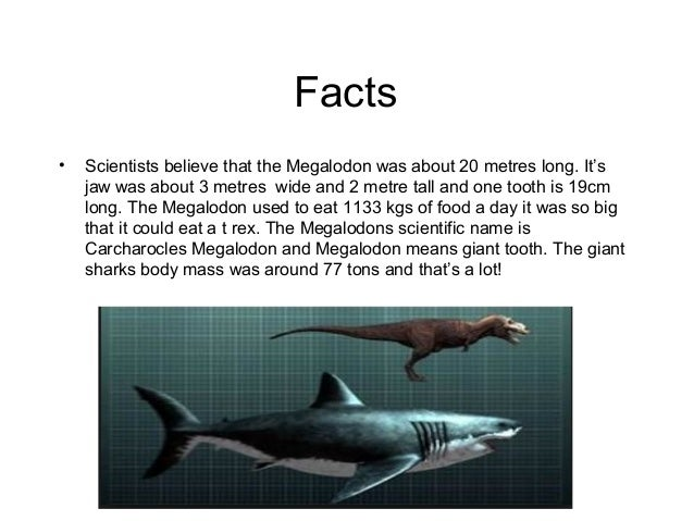 evidence on prehistoric sharks essay