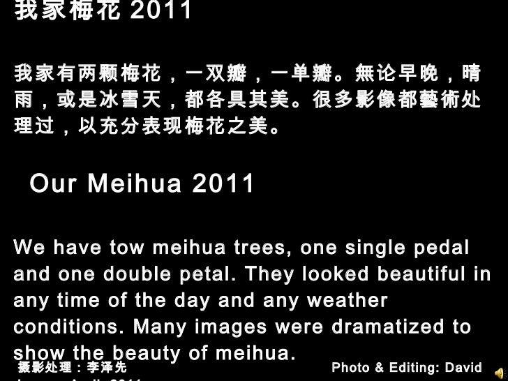 我家梅花 2011  我家有两颗梅花,一双瓣,一单瓣。無论早晚,晴雨,或是冰雪天,都各具其美。很多影像都藝術处理过,以充分表现梅花之美。   Our Meihua 2011 We have tow meihua trees, one singl...