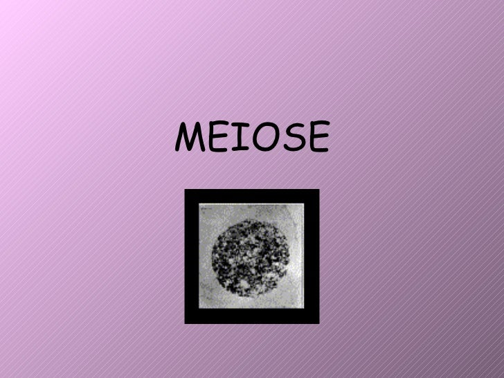 Meiose 2010 2011 new