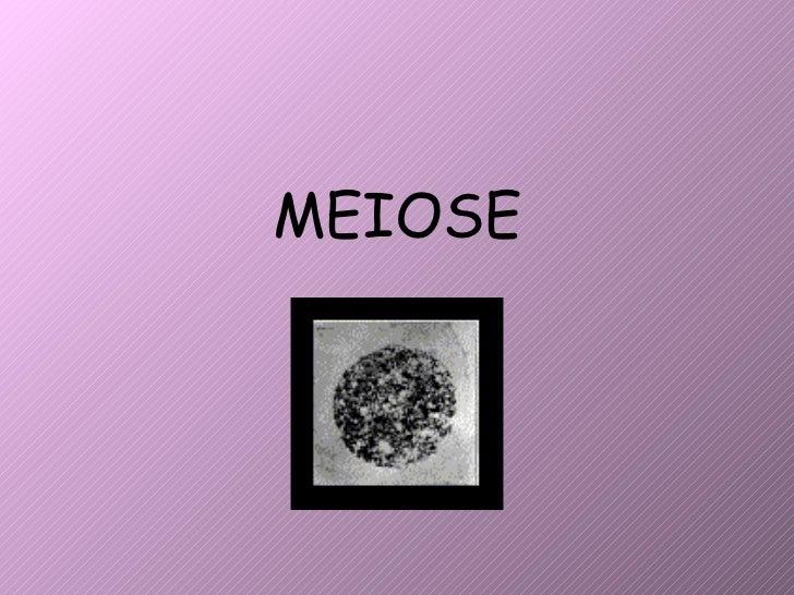 Meiose 2010 2011 new