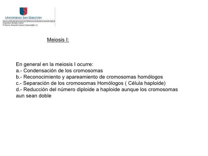 Meiosis I:    En general en la meiosis I ocurre: a.- Condensación de los cromosomas b.- Reconocimiento y apareamiento de c...