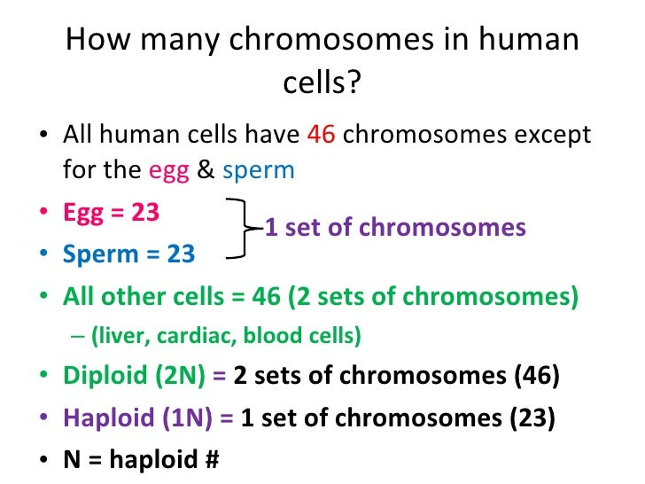 How many sex chromosomes are in a human gamete photo 64