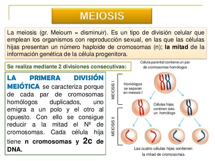 MEIOSIS<br />La meiosis (gr. Meioum = disminuir). Es un tipo de división celular que emplean los organismos con reproducci...