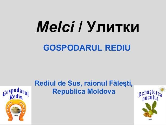 Melci / Улитки  GOSPODARUL REDIURediul de Sus, raionul Făleşti,     Republica Moldova