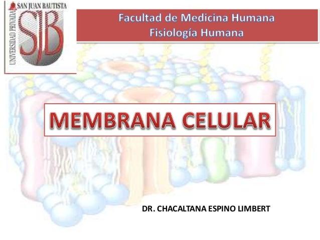 DR. CHACALTANA ESPINO LIMBERT