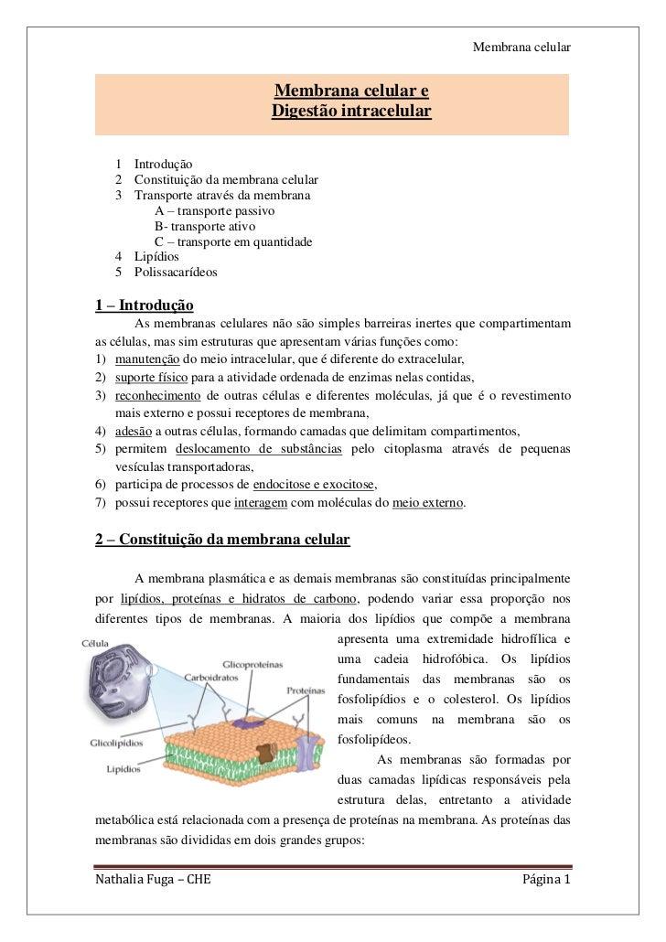 Membrana celular                               Membrana celular e                               Digestão intracelular   1 ...