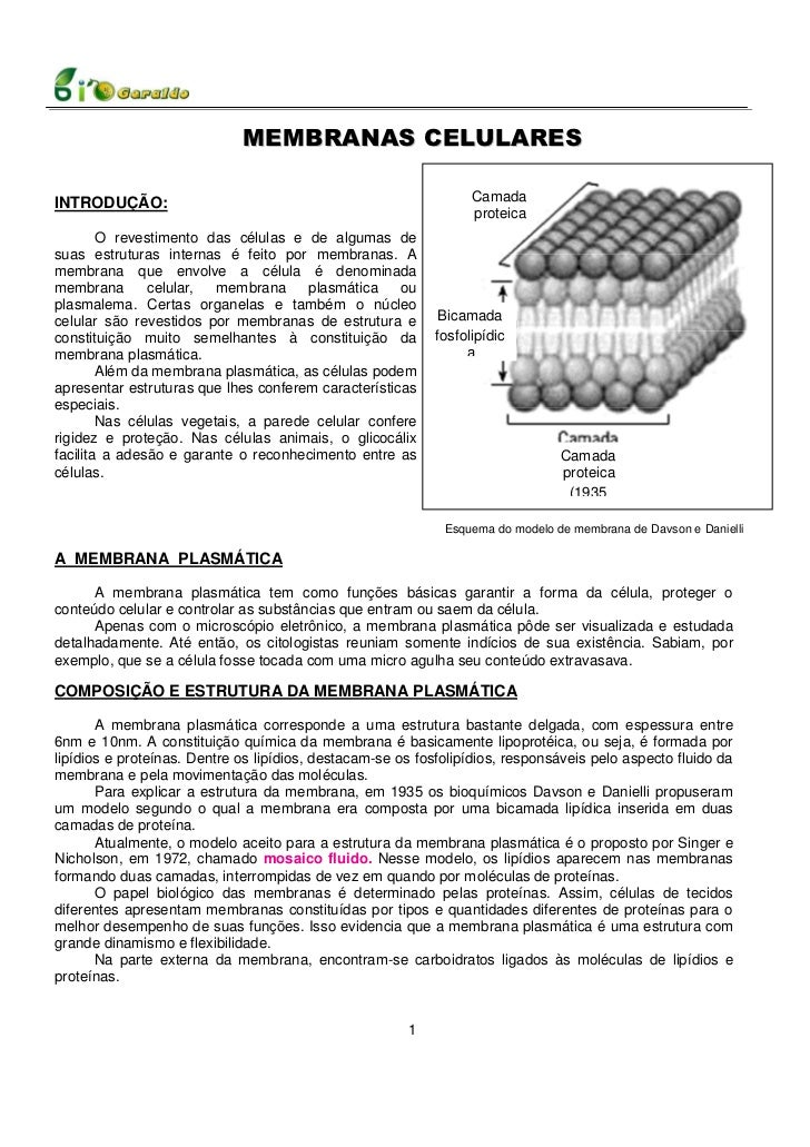 MEMBRANAS CELULARES                                                                  CamadaINTRODUÇÃO:                    ...