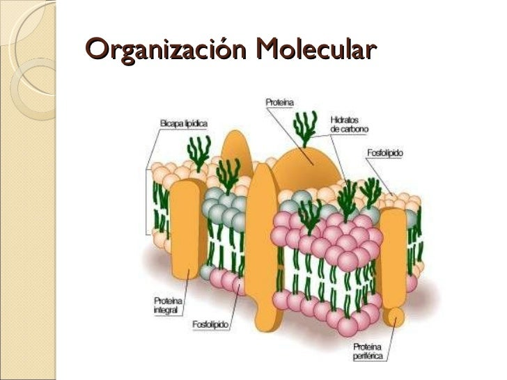 Membrana plasm tica for Membrana para hidropack