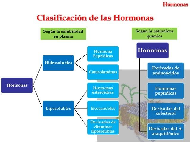 funcion de los esteroides en el cuerpo humano