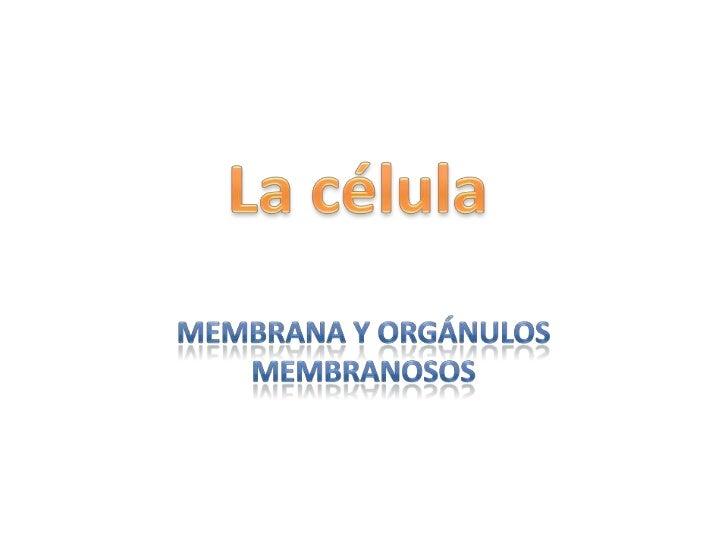 La célula<br />Membrana y orgánulos membranosos<br />