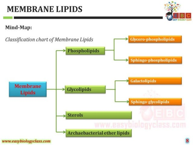 structure and properties biological membranes Lipids are diverse compounds that are insoluble in water they store energy, protect against water loss, and form cell membranes.